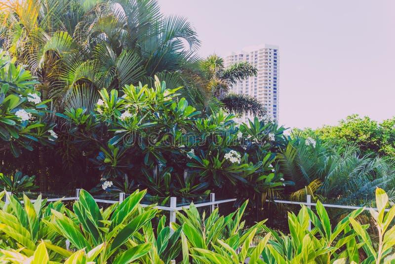 tropische frangipani en palmen met high-rise de bouw op de achtergrond in Surfersparadijs stock foto