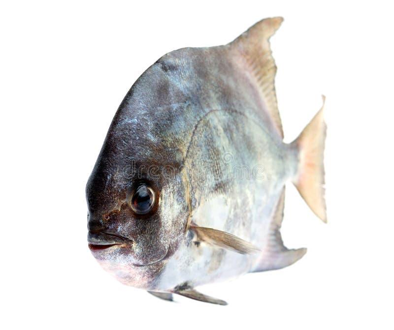 Tropische frische Fische stockbilder