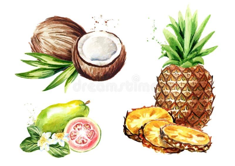 Tropische fruitreeks Kokosnoot, ananas, guave Waterverfhand getrokken die illustratie, op witte achtergrond wordt geïsoleerd vector illustratie