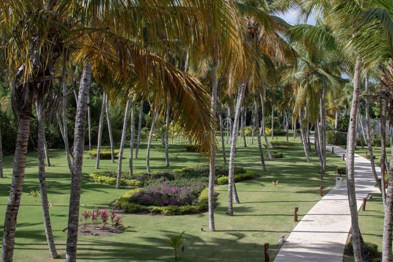 Tropische gang door palmen royalty-vrije stock foto's