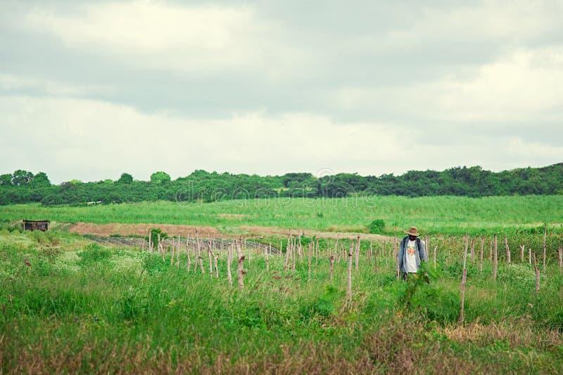 Tropische gebieden Landbouw Een mens in een rieten hoed royalty-vrije stock fotografie