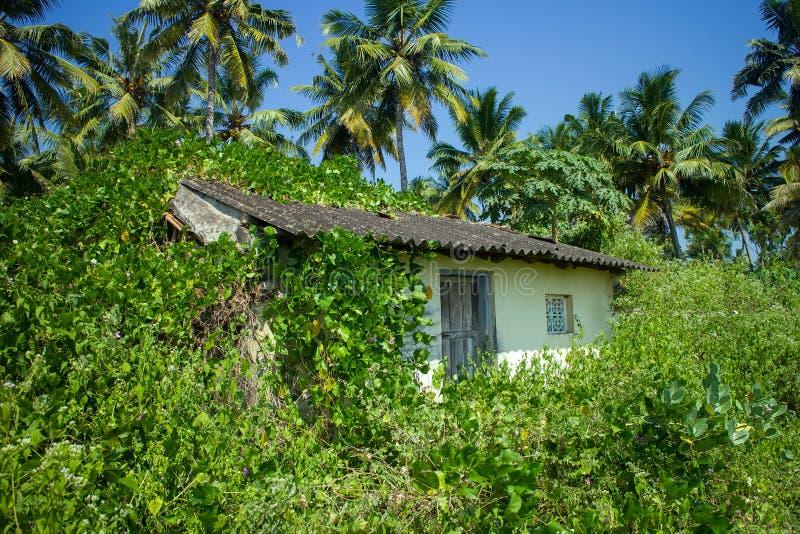 Tropische gebladertesterke drank met palmen en een keet die in wilde installaties wordt begraven stock afbeeldingen