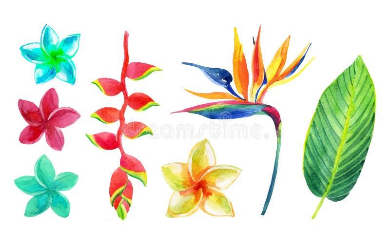 Tropische geplaatste bladeren en bloemen royalty-vrije illustratie