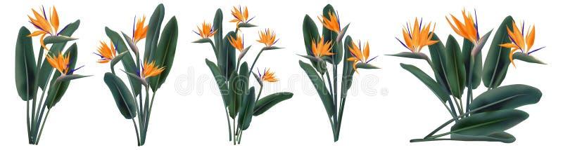 Tropische geplaatste de bloemboeketten van Strelitziareginae royalty-vrije illustratie
