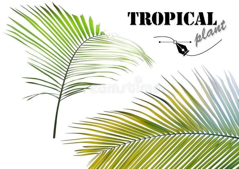 Tropische geplaatste palmbladen vector illustratie