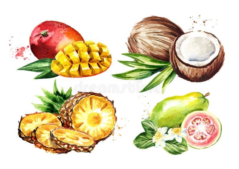 Tropische Geplaatste Vruchten Mango, kokosnoot, guave, ananas Waterverfhand getrokken die illustratie op witte achtergrond wordt  royalty-vrije illustratie