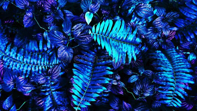 Tropische gloeiende bladeren royalty-vrije stock fotografie
