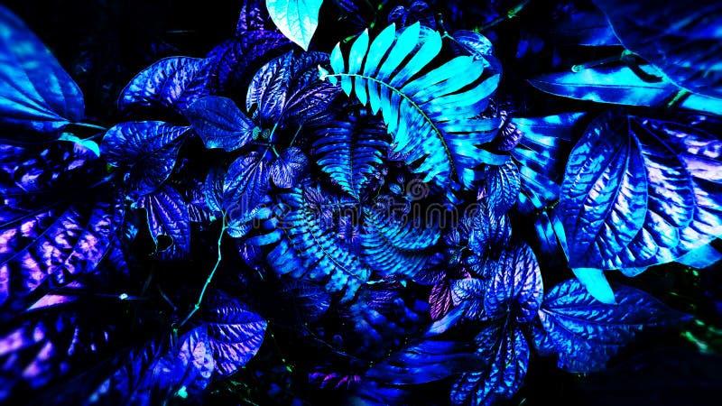Tropische gloeiende bladeren royalty-vrije stock foto's