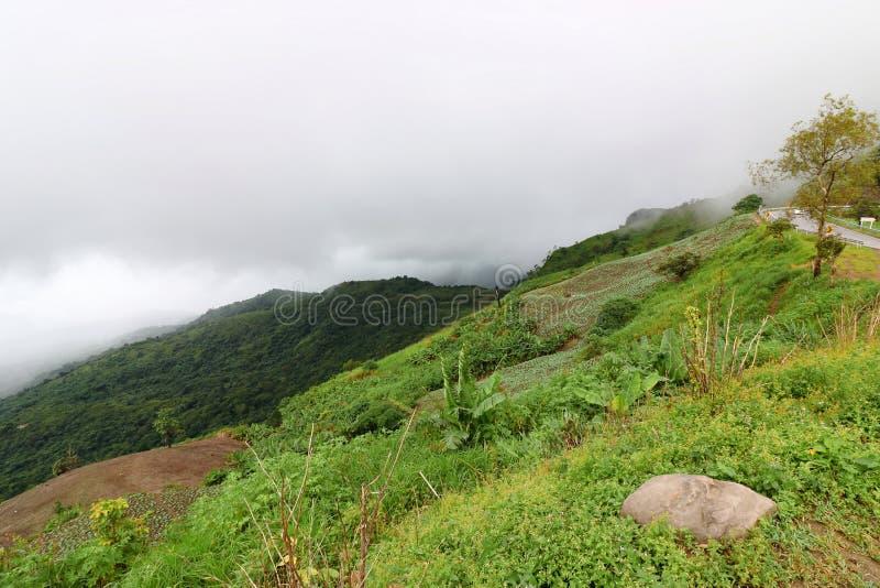 Tropische groene berg met zware mist in regenachtige dag stock afbeelding