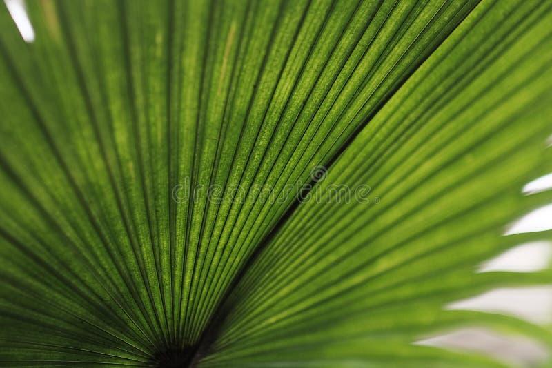 Tropische groene bladachtergrond stock foto's