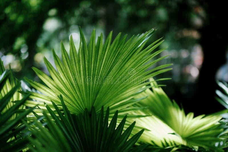 Tropische groene bladachtergrond in de zomer stock afbeelding