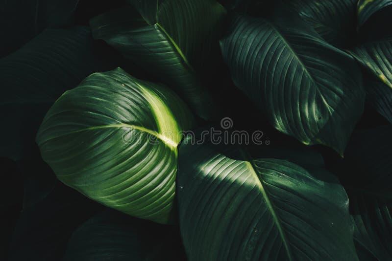 tropische Groene bladerenachtergrond royalty-vrije stock afbeeldingen