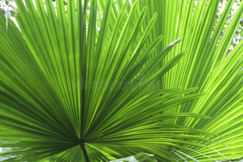 Tropische groene de textuurachtergrond van het bladdetail royalty-vrije stock foto's