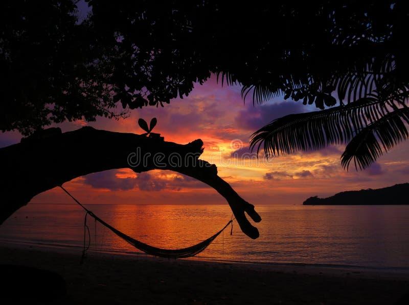 Tropische Hangmat in Paradijs bij Zonsondergang stock afbeeldingen