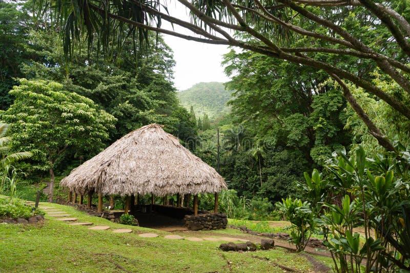 Tropische Hutstructuur Hawaï Forest Straw Plant Roof stock afbeelding