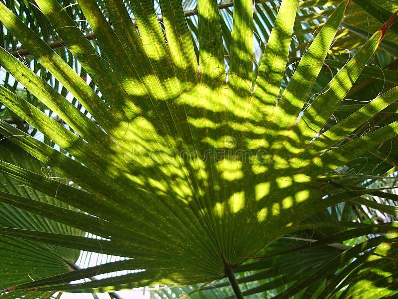 Tropische ina heldere zonneschijn van het palm groene blad royalty-vrije stock afbeeldingen