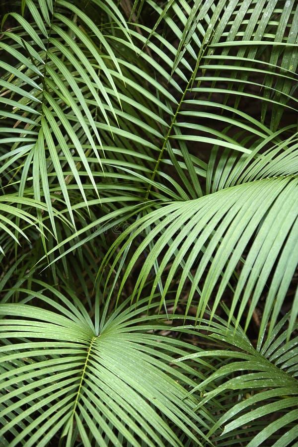 Tropische installatie. stock afbeeldingen