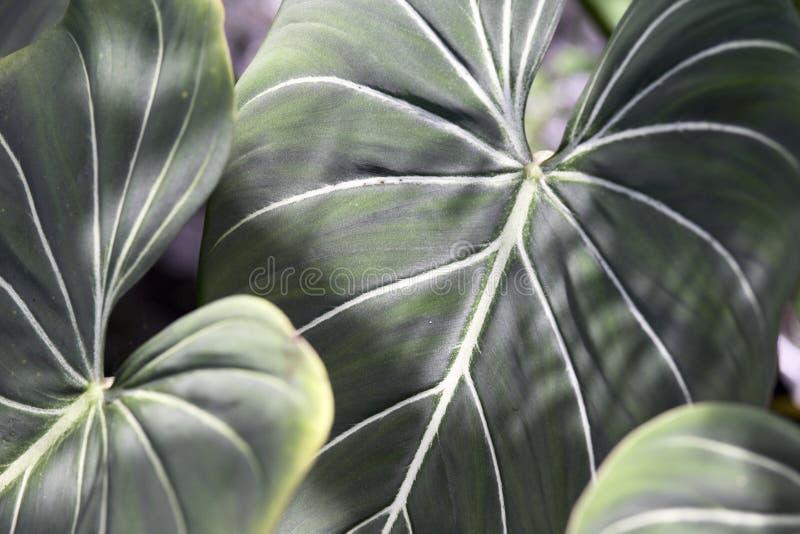 Tropische Installatie royalty-vrije stock afbeeldingen
