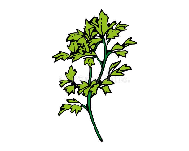 Tropische installatie met grote die bladeren met groen die gebladerte in kreupelhoutvoorwerp worden gevlecht op witte achtergrond royalty-vrije illustratie