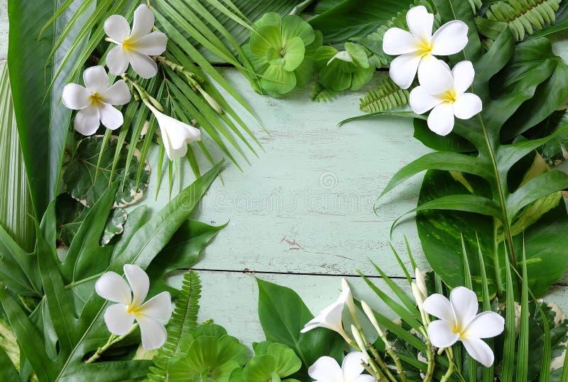 Tropische installatiebladeren en witte plumeria royalty-vrije stock afbeelding