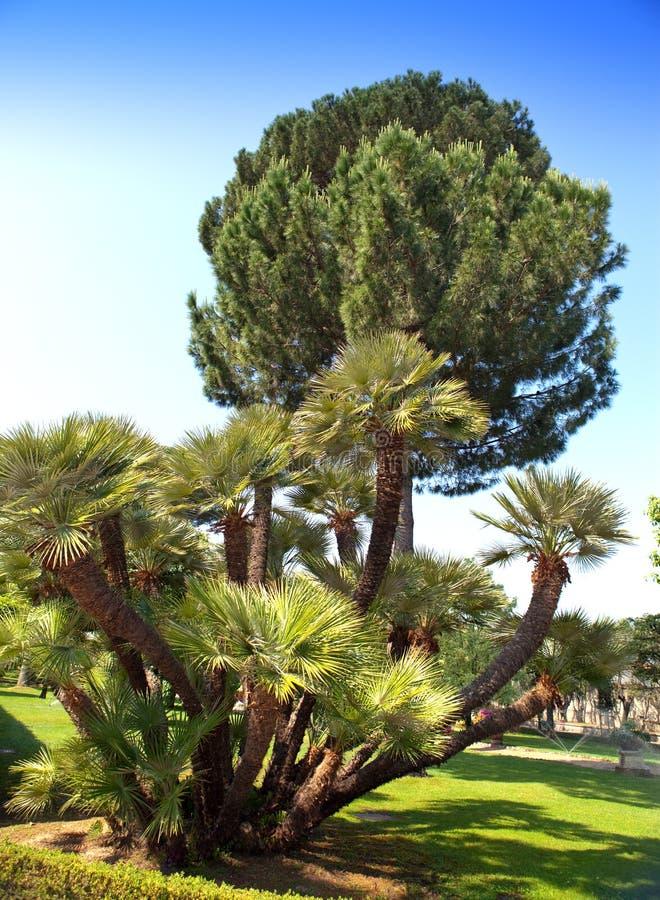 Tropische installaties in de tuinen van Vatikaan stock afbeelding