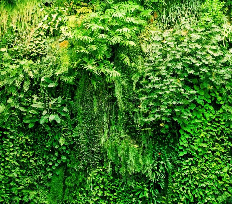 Tropische installaties groene achtergrond. royalty-vrije stock afbeeldingen