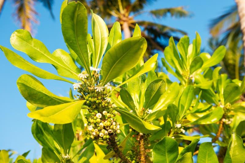 Tropische installaties met palmen royalty-vrije stock foto's