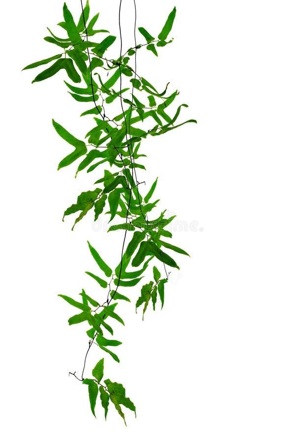 Tropische klimplanten royalty-vrije stock foto
