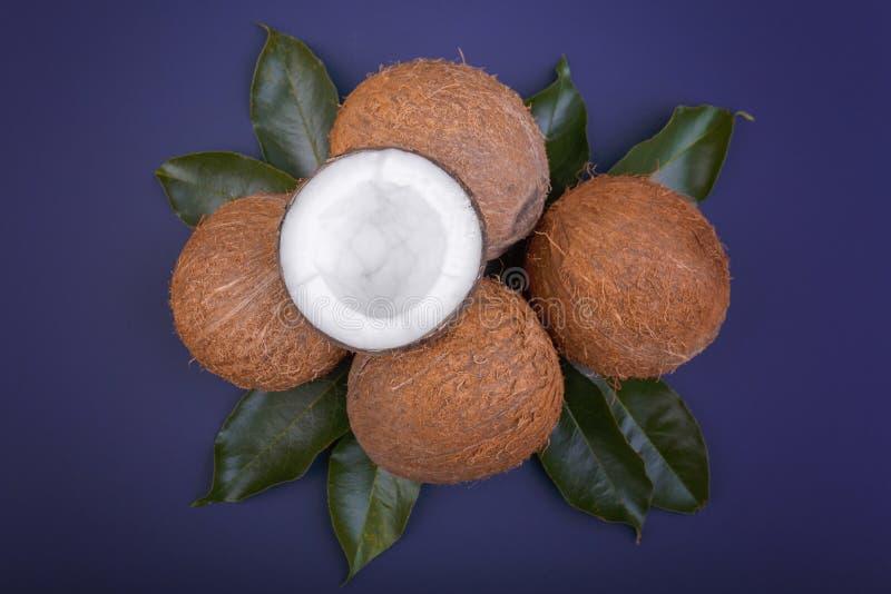 Tropische kokosnoten met groene bladeren Organische en voedzame noten Gehele kokosnoten, hoogste mening De zomervruchten Verse co stock afbeeldingen