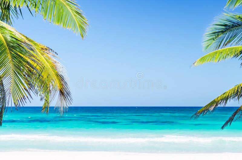 Tropische kustmening en palmen over turkooise overzees bij exotisch zandig strand in Caraïbische overzees royalty-vrije stock afbeelding