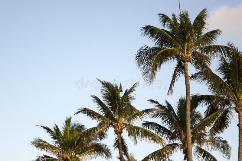 Tropische Landschaft stockfotografie