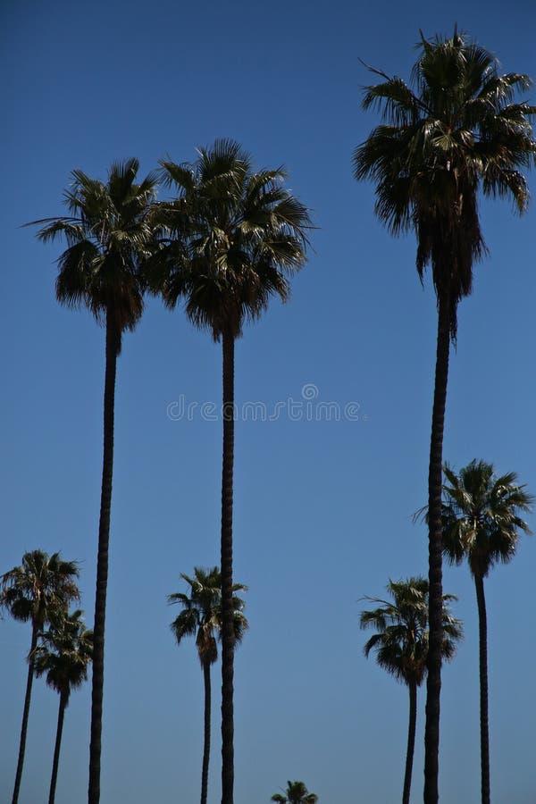 Tropische Landschaft stockfotos