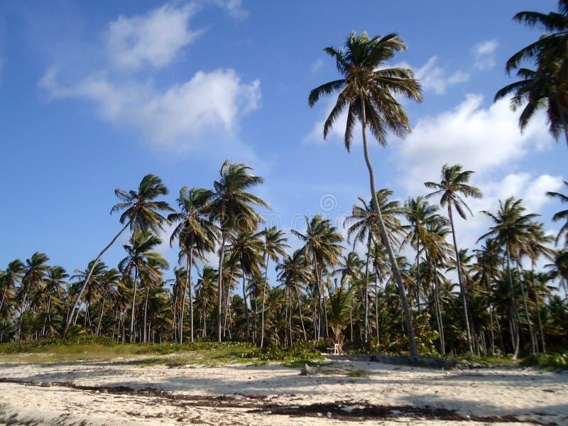 Tropische Landschaft lizenzfreies stockbild