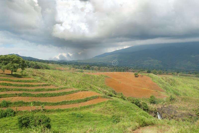Tropische Landwirtschaftslandschaft stockfotografie