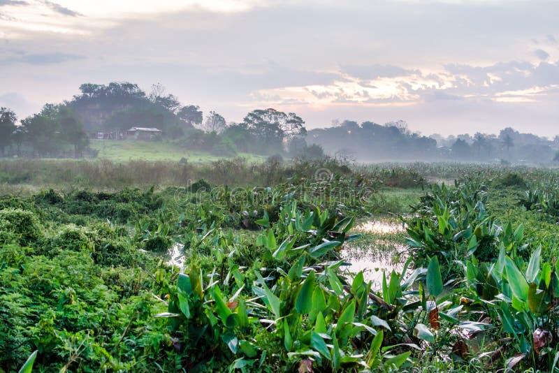 Tropische mexikanische Landschaft lizenzfreies stockfoto