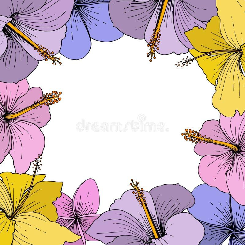 Tropische mit Blumenblumen des Vektor-Hibiscus Gravierte Tintenkunst auf weißem Hintergrund Feldgrenzverzierungsquadrat lizenzfreie abbildung