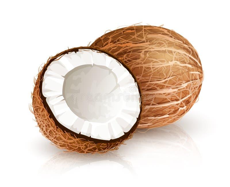 Tropische Nussfrucht der Kokosnuss mit Schnitt Illustrations-Weißhintergrund des Vektors Eps10 lizenzfreie abbildung