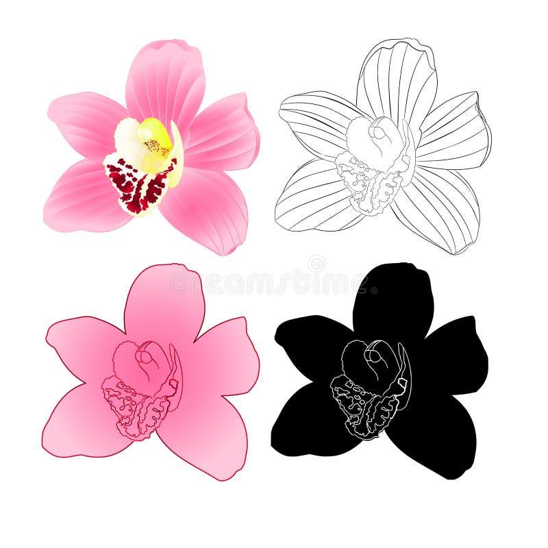 Tropische Orchidee Cymbidium-Rosablume natürlich und Schattenbild und Entwurf auf weißem Hintergrundweinlesevektor-Illustration e vektor abbildung