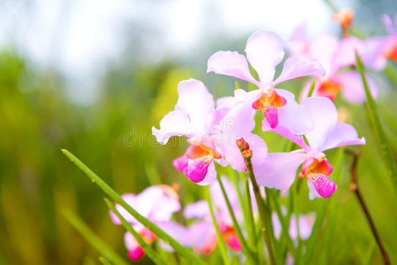 Tropische Orchidee im Rot, im Rosa und in der Magenta lizenzfreie stockbilder
