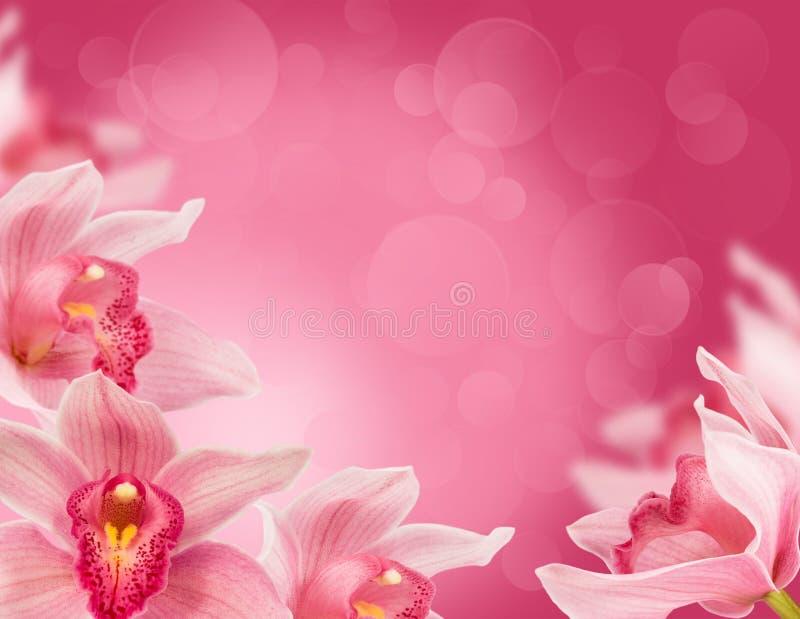 Tropische Orchideen stockbilder
