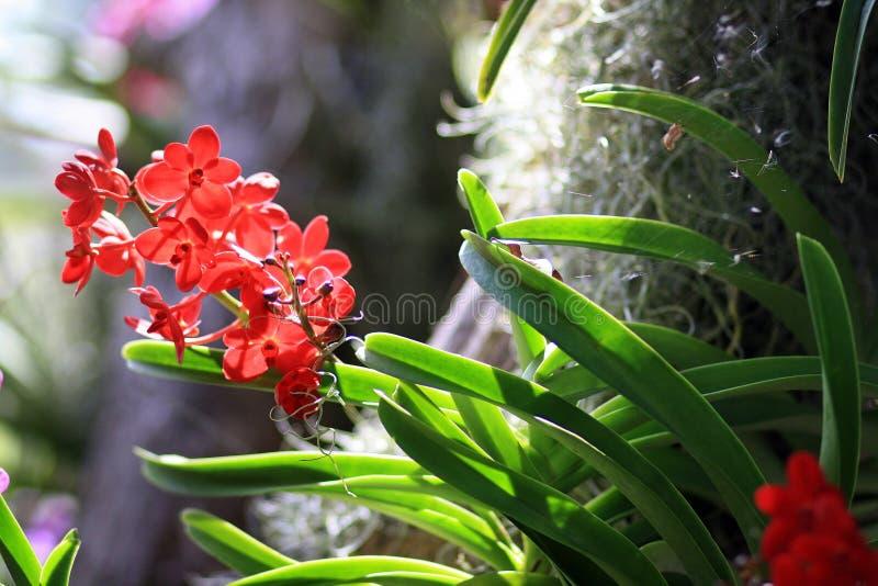 Tropische Orchideen lizenzfreies stockbild