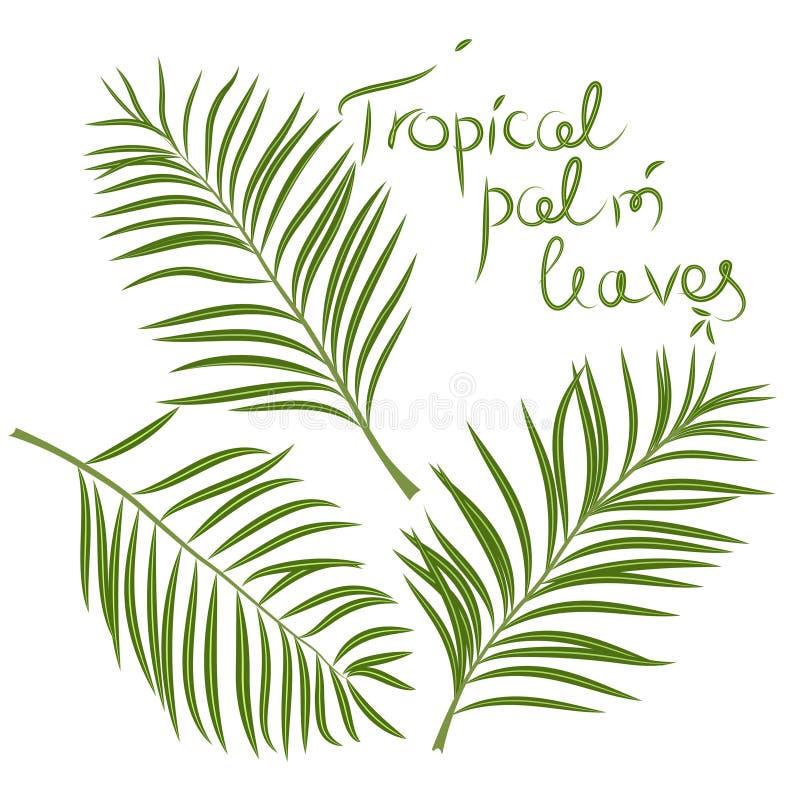 Tropische Palmblätter Arekanussniederlassung Vektor lokalisiert lizenzfreie abbildung