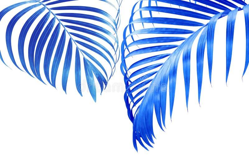 Tropische Palmblätter in blauer Tone Color Isolated auf weißem Hintergrund stockfotos