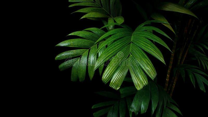 Tropische Palmblätter, Regenwaldlaub-Betriebsbäume auf schwarzem Ba lizenzfreie stockfotos