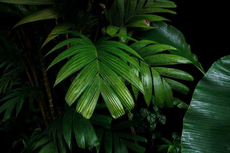 Tropische Palmblätter und Regenwaldlaubanlagen bepflanzen das Wachsen mit Büschen stockfotos