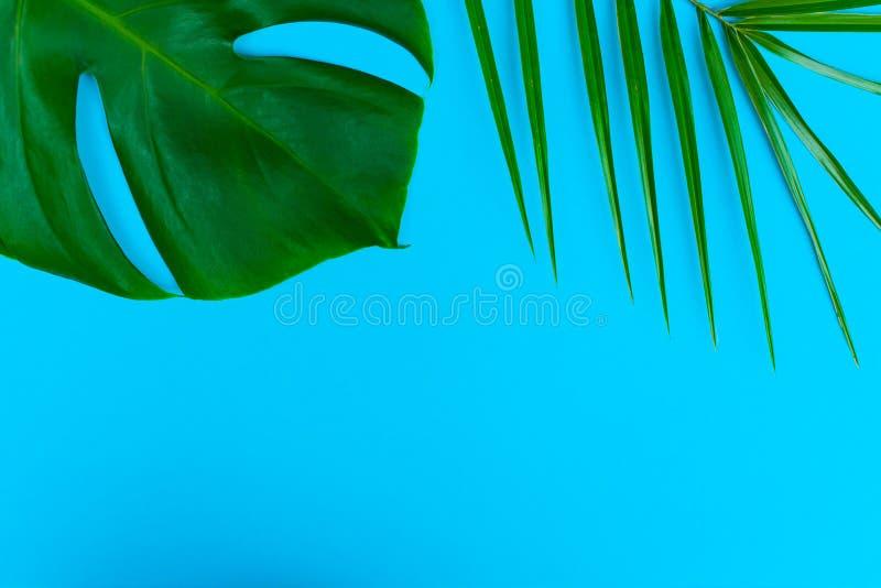 Tropische palmbladen en Monstera-bloem op een blauwe achtergrond Creatieve lay-out van deze tropische bladeren op een blauwe acht royalty-vrije stock fotografie