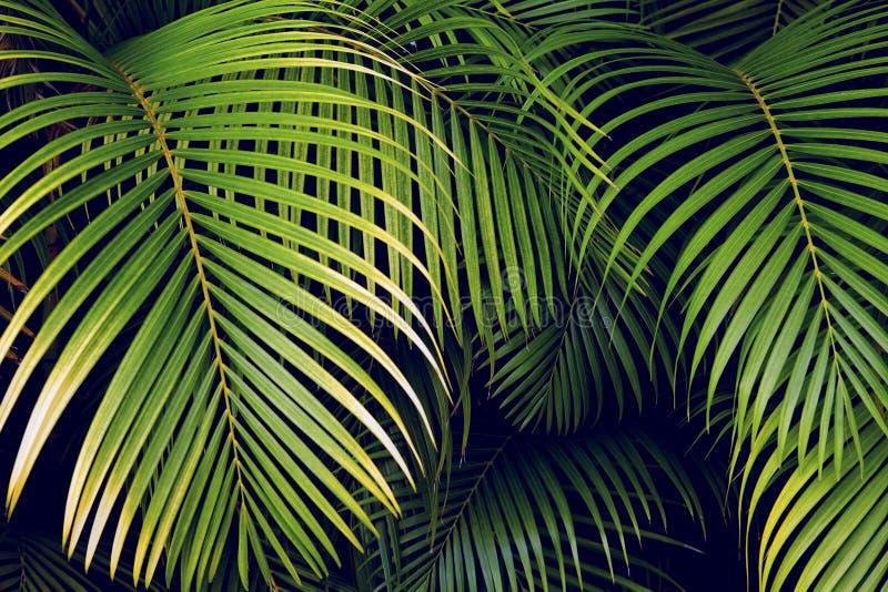 Tropische palmbladen, naadloze bloemen het patroonachtergrond van het wildernisblad stock afbeeldingen