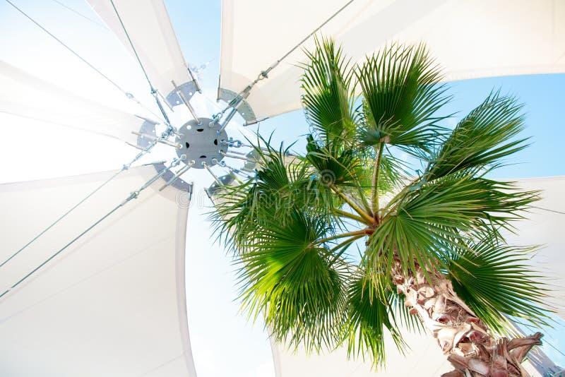 Tropische Palme mit hellem Markisenregenschirm unter Sonnenscheinreflexion des blauen Himmels stockfotos