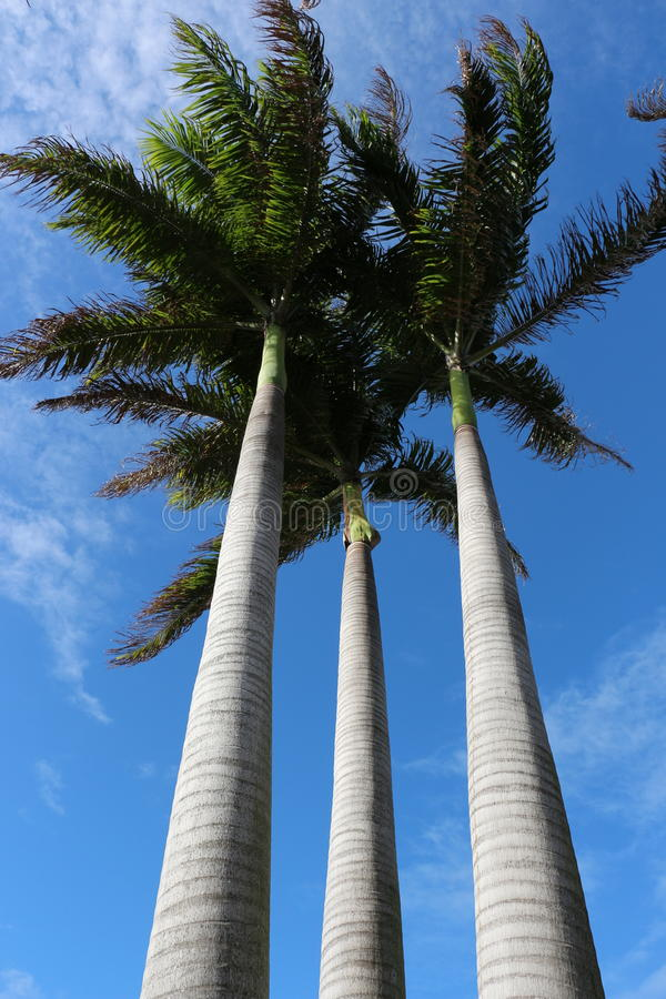 tropische palmen stock afbeelding