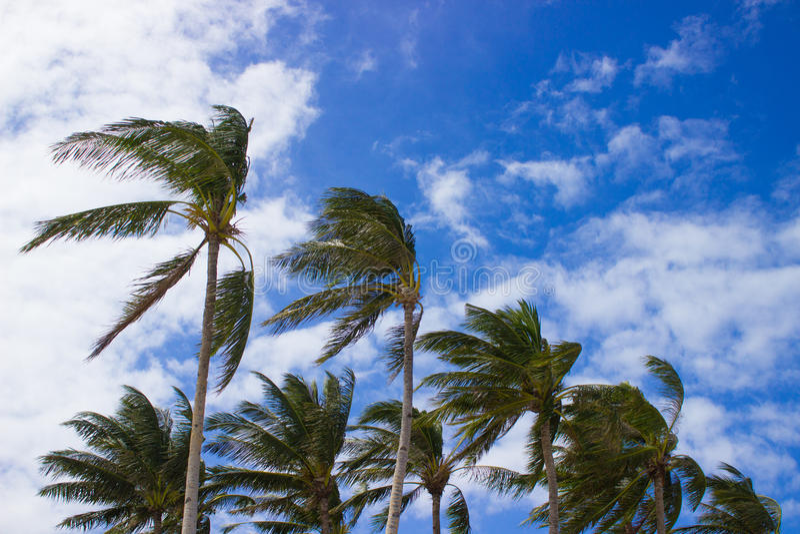 Tropische palmen royalty-vrije stock foto